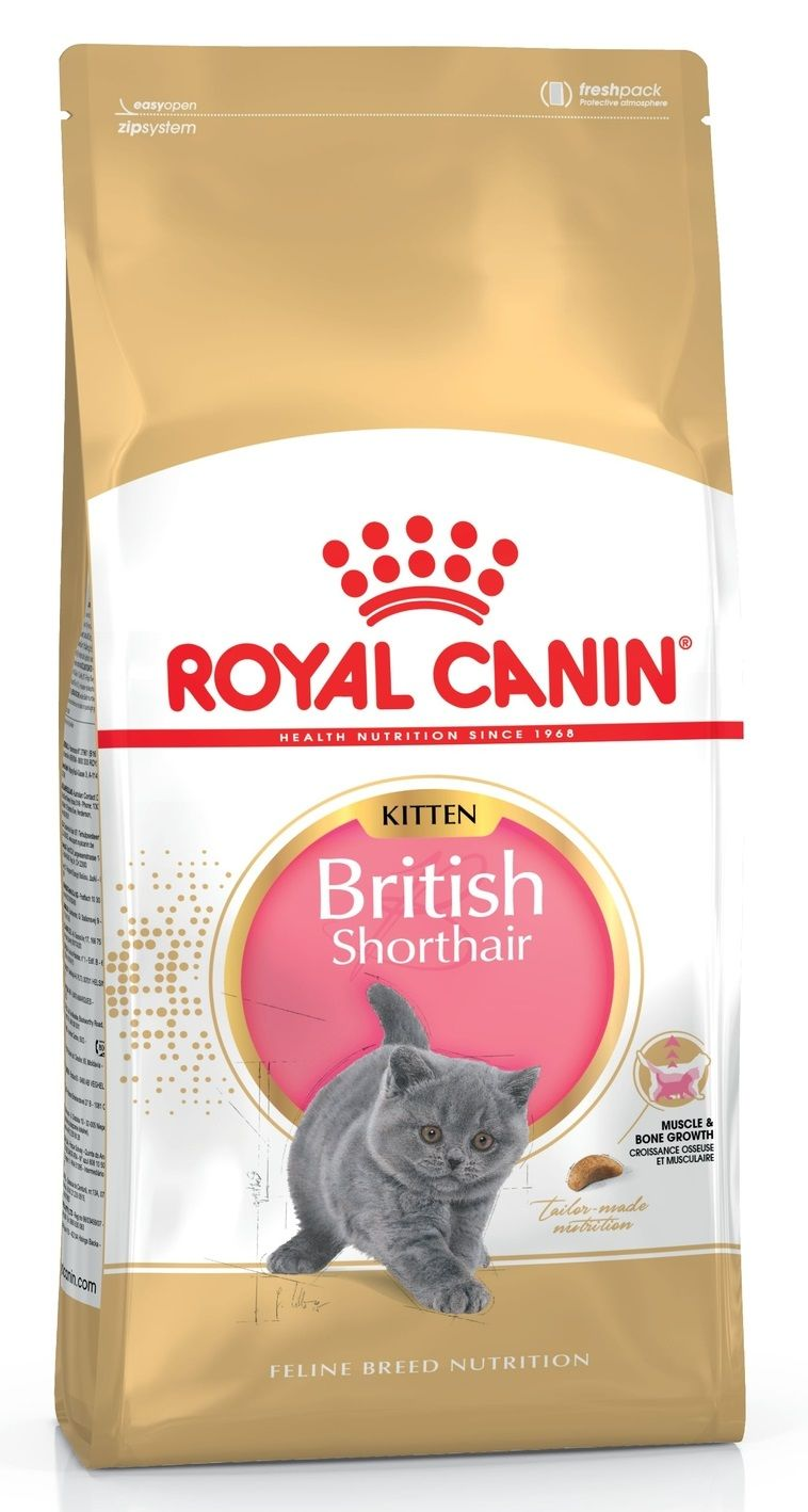 KITTEN BRITISH SHORTHAIR 10кг