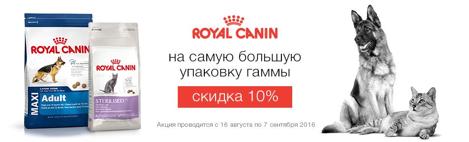 большие-10%